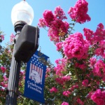 Downtown banner with flowering trees